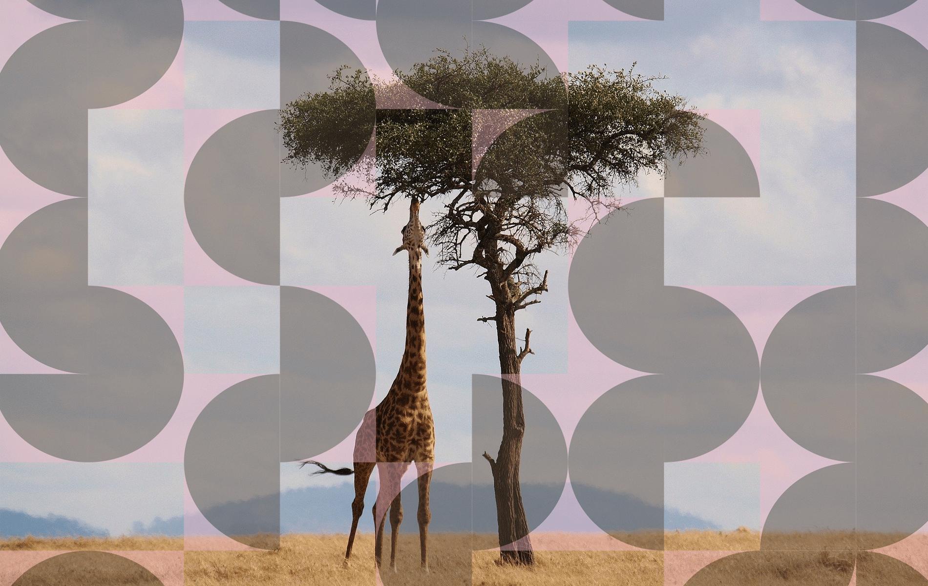 giraffe greenmonkeys proeftijd